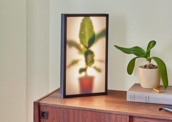 Growing Plants indoors klein